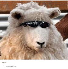 Alpaca Sheep Meme - image 866677 tumblr know your meme