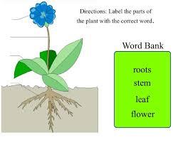 10 best images of label flower parts template label plant parts
