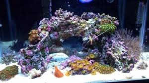 creating your own live rock for saltwater tanks ratemyfishtank