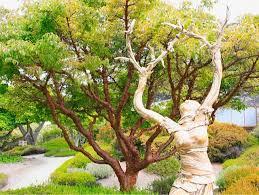 Fort Bragg Botanical Garden Fort Bragg Attraction Mendocino Coast Botanical Gardens