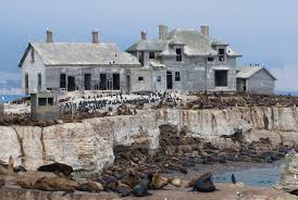 abandoned places near me awesome abandoned places around the world occupied by animals