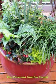 winter container container gardening ideas pinterest
