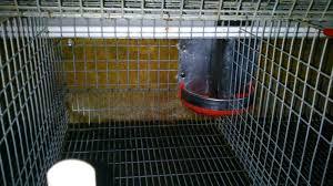 reti per gabbie gabbie per conigli fattrici rimonta e a benevento kijiji
