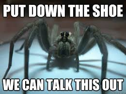 Sad Spider Meme - sad wolf spider memes quickmeme
