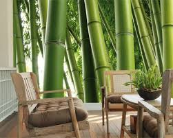 home interior small living room decor with stunning green bamboo