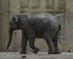 Elephant Meme - elephant meme best image of elephant 2018