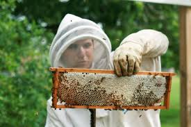 The Backyard Beekeeper 8 Ways To Be A Courteous Backyard Beekeeper Countryside Network