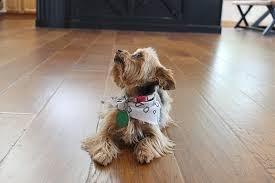 dog and hardwood floors pets u0026 hardwood floors which type of hardwood is the most pet