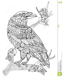 coloring pages detailed hawk bird coloring
