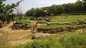 Dallas Zoo Map by Dallas Zoo 2 Off Admission