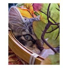 thanksgiving cat art u0026 framed artwork zazzle