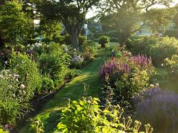 perennial garden in late afternoon contemporary landscape