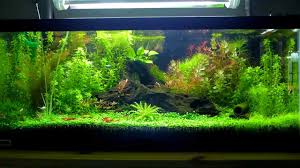 Plants For Aquascaping Nature Aquarium Aquascape Peter U0027s 20g Breeder Shrimp Aquarium 3
