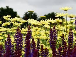 helmsley walled garden wellywoman