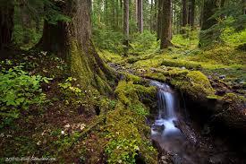 Washington forest images Little forest fall olympic national park washington morning jpg
