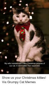 Grumpy Cat Memes Christmas - my wife insisted that l take christmas pictures of our cat it went