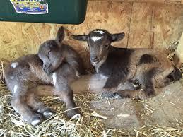 woody glen farm blog