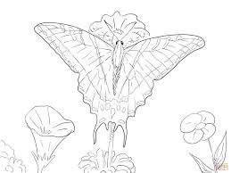 two tailed swallowtail butterfly coloring page free printable