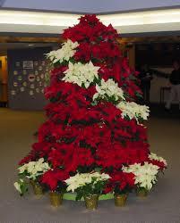 poinsettia tree poinsettia tree grace lutheran church
