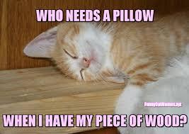 Funny Kitten Meme - wood is better than a pillow for this kitten funny kitten meme