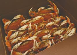 search for crab news on seafoodnews com seafoodnews com the most