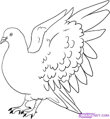 drawn pigeon simple pencil color drawn pigeon simple