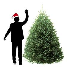 fraser fir christmas tree fraser fir christmas trees hilltop christmas tree delivery