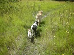 Poems Of Comfort For Loss Poems For Pet Loss U0027we Have A Secret U0027