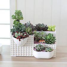mecai small plant succulent planter large pots cacti garden