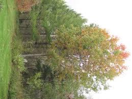 red oak u2013 pei u0027s provincial tree watts tree farm blog