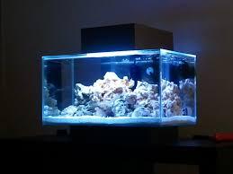 fluval edge marine light fluval edge tank thread page 25 aquarium journals nano reef
