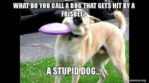 Doge Meme Create - what do you call a dog that gets hit by a frisbee a stupid dog