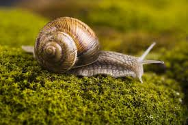 Where Can You Find Snails In Your Backyard And Snail Bait Poisoning In Dogs Symptoms Causes Diagnosis