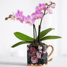 orchid plants orchid plants plants