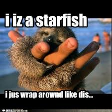 Starfish Meme - animal capshunz starfish funny animal pictures with captions
