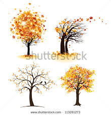 autumn tree stock images royalty free images vectors