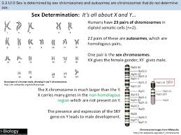 How Many Chromosomes Does A Somatic Cell Have Bioknowledgy Presentation On 3 2 Chromosomes