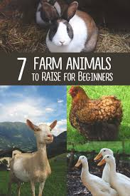6 best farm animals to raise when you u0027re just starting out