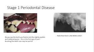 stages of pet periodontal disease pet dental health avdc