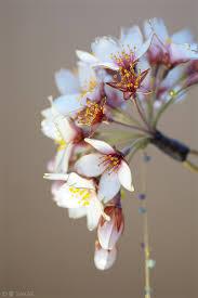 japanese hair pin kanzashi japanese flower hairpins by sakae me no memo