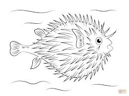 coloring tropical fish coloring pages free printable pictures