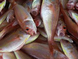 simple aquaculture methods u2013 a guide to fish farming nourish the