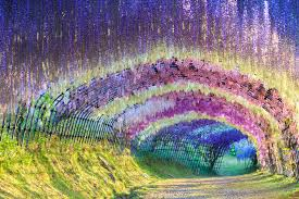 japan flower tunnel this incredible wisteria flower tunnel is a real place you can visit