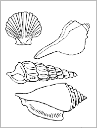 printable pictures of sea shells printable seashell coloring