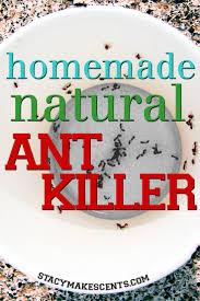 best homemade natural ant killer humorous homemaking