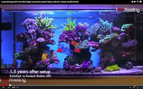 the two year progress video of schwing u0027s reef featured reefs news