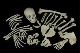 life size bucky skeleton skull bones and 47 similar items