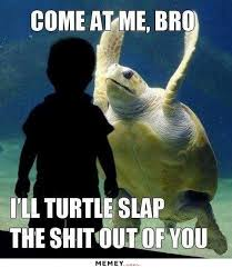 You Jelly Bro Meme - funny turtle memes turtle best of the funny meme