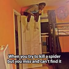 I Tried Killing A Spider - when you try to kill a spider but miss and can t find it