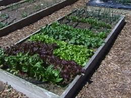 compact vegetable garden design ideas kitchen gardens raised bed